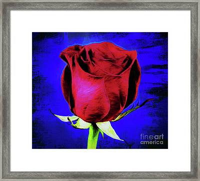 Rose - Beauty And Love  Framed Print by Ray Shrewsberry