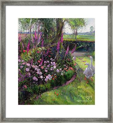 Rose Bed And Geese Framed Print by Timothy Easton