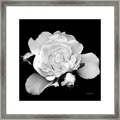 Framed Print featuring the photograph Rose Black And White by Christina Rollo
