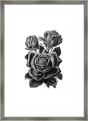 Framed Print featuring the digital art Rose Black by ReInVintaged