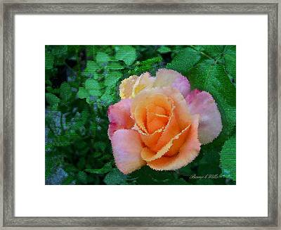 Framed Print featuring the photograph Rose by Bonnie Willis