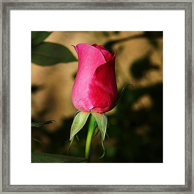 Rose Bud Framed Print by Anthony Jones