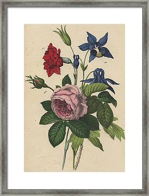 Rose Carnation Aquilegia Framed Print by German Botanical Artist