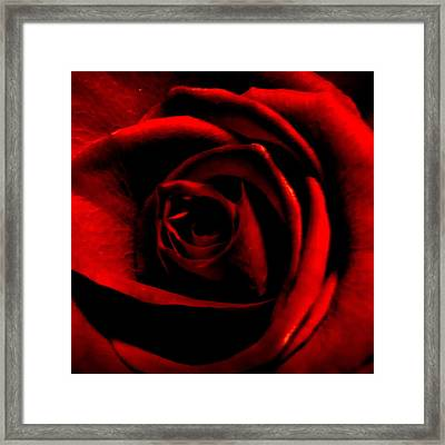 Rose Framed Print by CML Brown