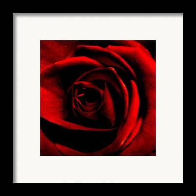 Deep Color Flower Framed Prints