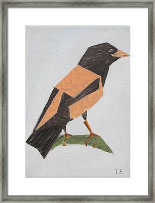 Rose-coloured Starling Framed Print