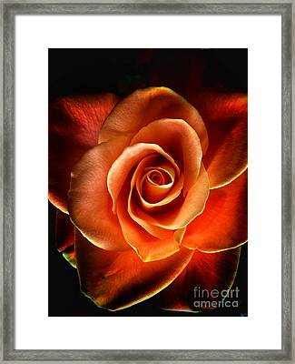 Framed Print featuring the photograph Rose by Donald Paczynski