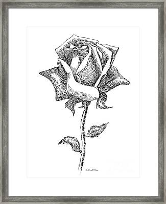 Rose Drawings Black-white 5 Framed Print