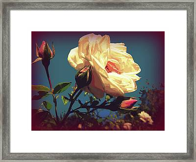 Rose Facing The Sun Framed Print by Susan Lafleur