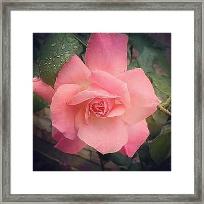 #rose #flower Created With Framed Print