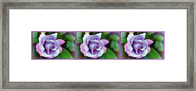 Rose For Love Framed Print by Lanjee Chee
