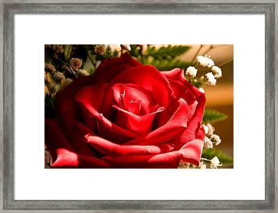 Rose For My Valentine Framed Print by Thomas R Fletcher