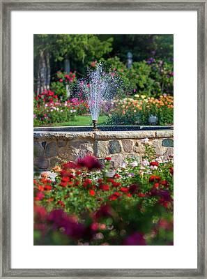 Rose Fountain Framed Print