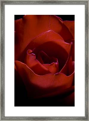 Rose Framed Print by Gabor Pozsgai