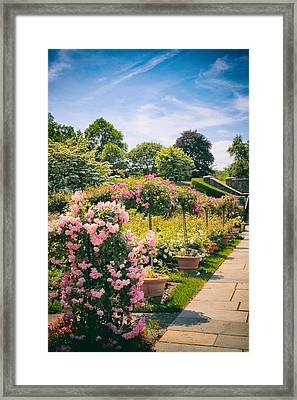 Rose Garden Allee  Framed Print by Jessica Jenney