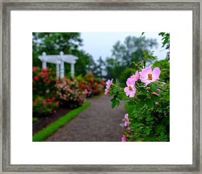 Rose Garden Gateway Framed Print by Chris Bordeleau