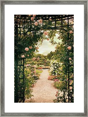 Rose Garden Grace Framed Print by Jessica Jenney