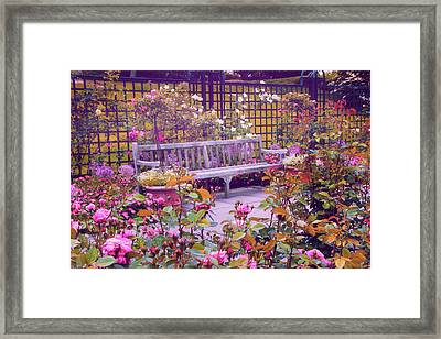 Rose Garden   Framed Print by Jessica Jenney