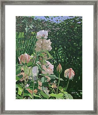 Rose Garden  Framed Print by Malcolm Warrilow