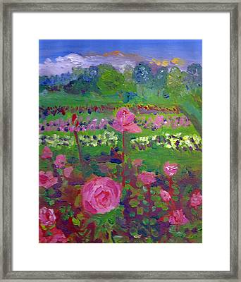 Rose Gardens In Minneapolis Framed Print