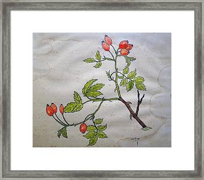 Rose Hip Framed Print