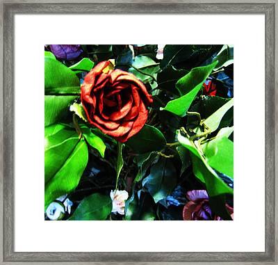 Rose Framed Print by HollyWood Creation By linda zanini