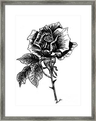 rose I  Framed Print by Nancy Rucker