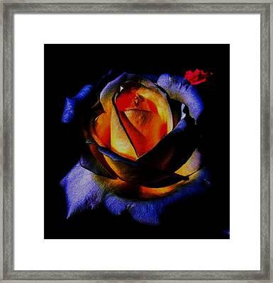 Rose II Framed Print by Mohammed Nasir