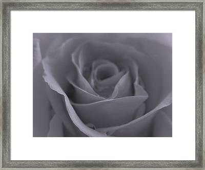 Rose In Black And White  Framed Print by Juergen Roth