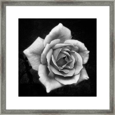 Rose In Mono. #flower #flowers Framed Print