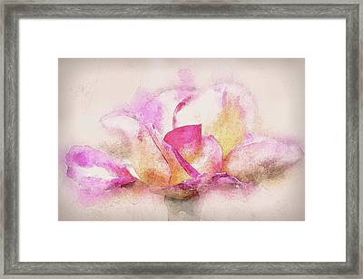 Rose In Pink And White Framed Print