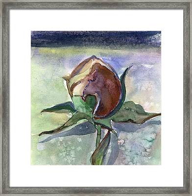 Rose In The Snow Framed Print by Mindy Newman