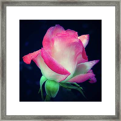 Framed Print featuring the photograph Rose Jacnepal Gemini by Julie Palencia