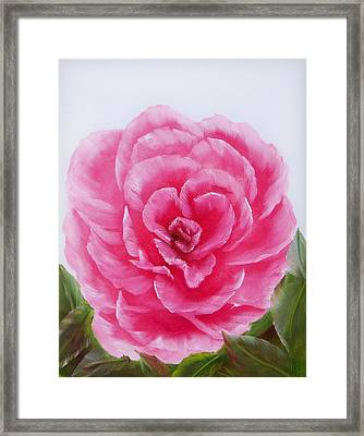 Rose Framed Print by Joni McPherson