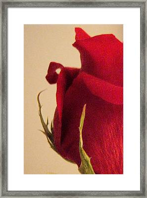 Rose Framed Print by Kristine Nora
