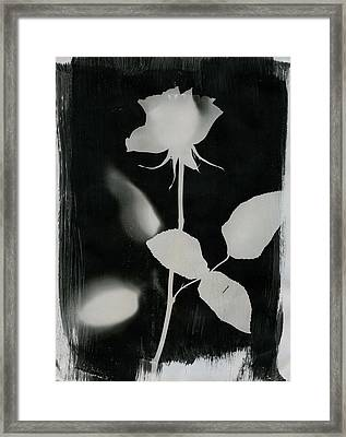 Rose Framed Print by Lux-Aura Exhibition