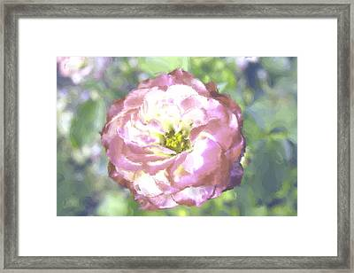 Rose Framed Print by Maria Freeman