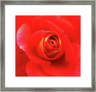 Framed Print featuring the photograph Rose by Mary Ellen Frazee