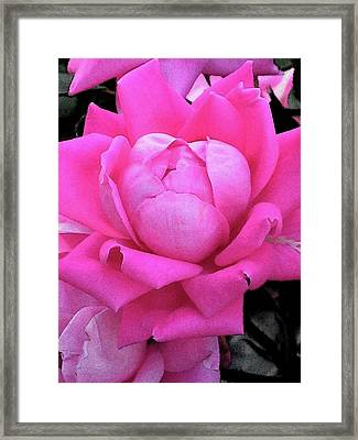 Rose Framed Print by Michele Caporaso