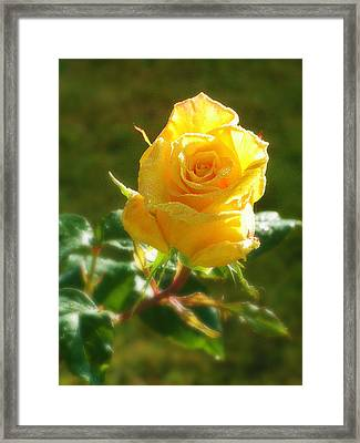 Rose Of Friendship Framed Print by Mg Blackstock