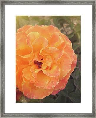Rose Of Seville Framed Print by JAMART Photography