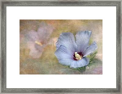 Rose Of Sharon - Hibiscus Framed Print