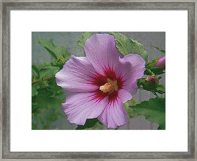 Framed Print featuring the painting Rose Of Sharon by John Dyess