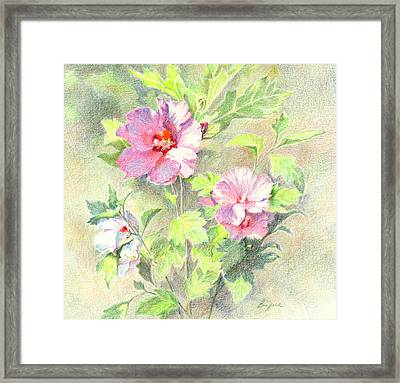 Rose Of Sharon Framed Print by Vikki Bouffard