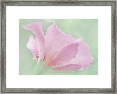 Rose Of Sharon....after The Rain Framed Print by Hal Halli