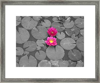 Rose Of The Water Framed Print