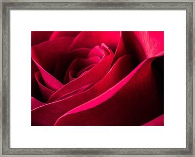 Rose Of Velvet Framed Print