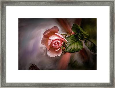 Rose On Paint #g5 Framed Print