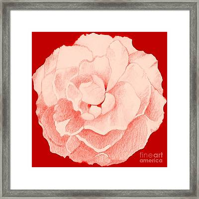 Rose On Red Framed Print by Helena Tiainen