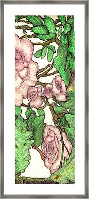 Rose Panel No 2 Framed Print by Edward Ruth